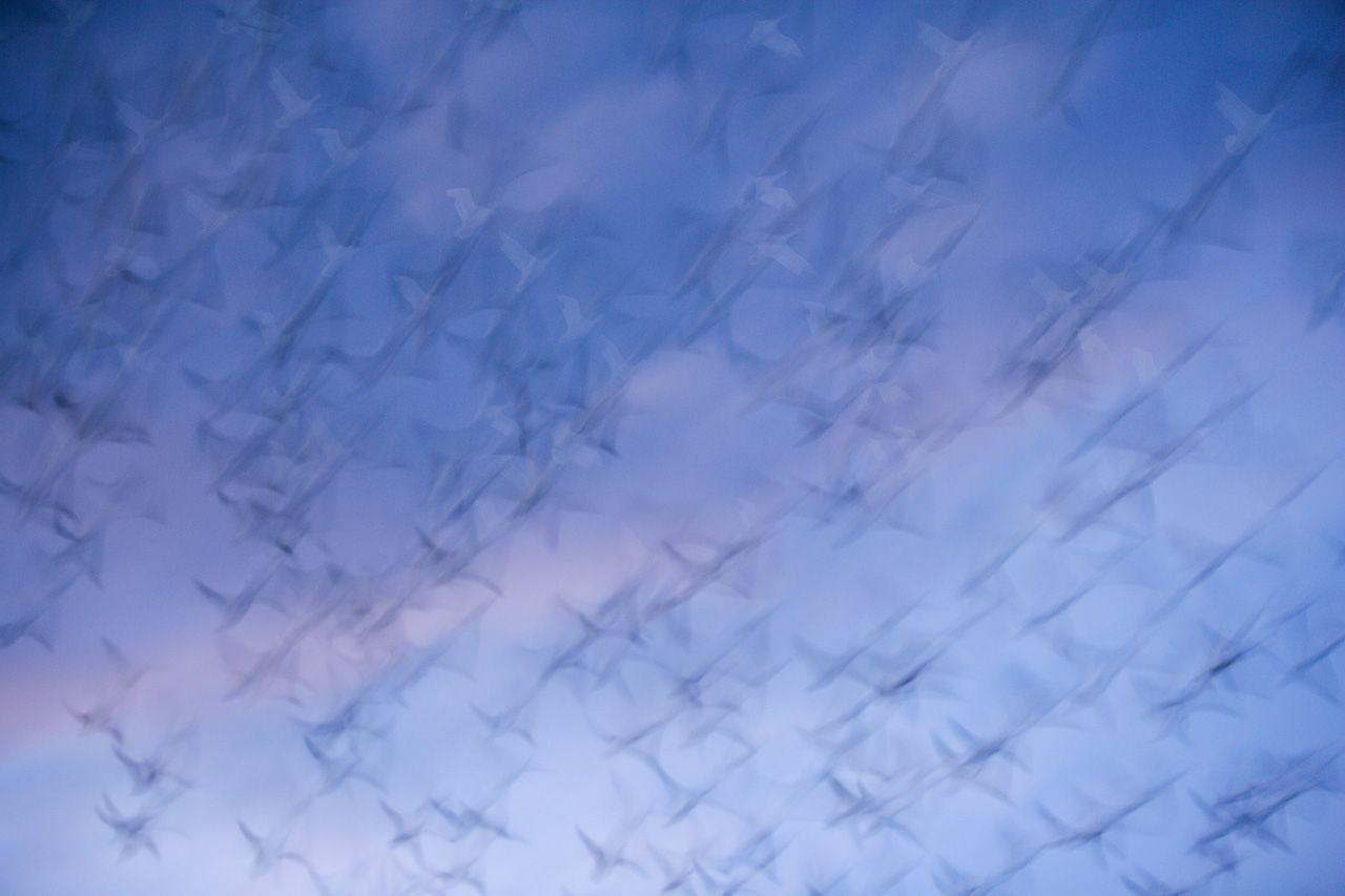 in un batter d'ali